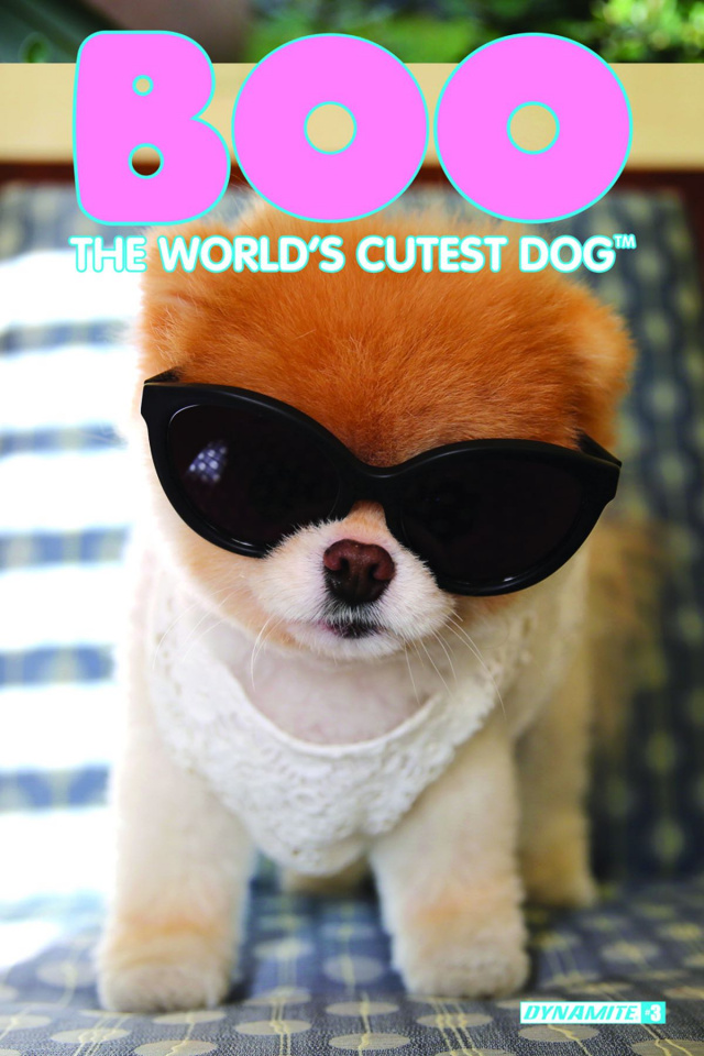 Boo: The World's Cutest Dog #3 (Photo Subscription Cover)