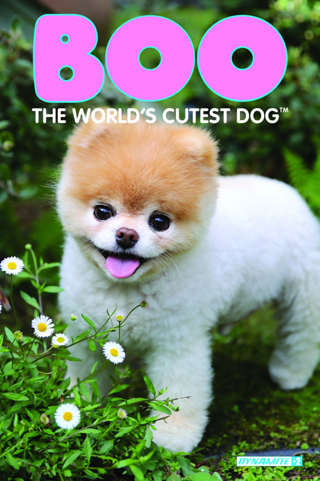 Boo: The World's Cutest Dog #2 (Photo Subscription Cover)